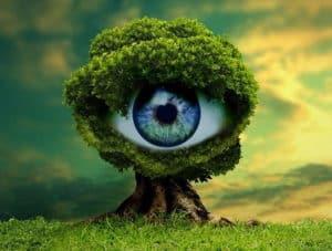 Publicité écologique : 14 principes verts à respecter pour un marketing sans greenwashing